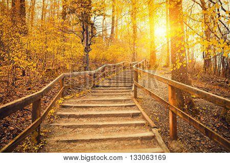 Beautiful Sunrise In Autumn Forest Near Zurich, Switzerland