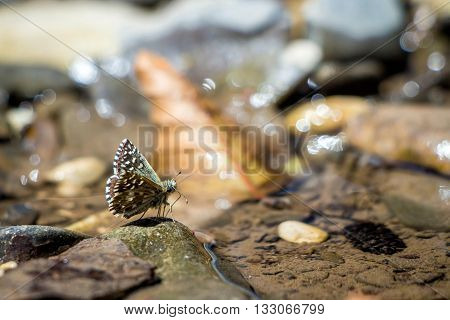 Butterfly on a branch near the water