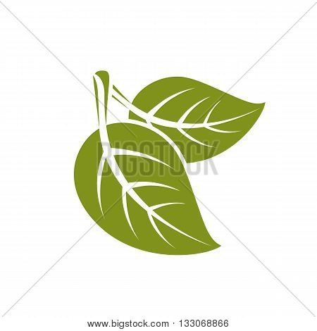 Two vector flat green leaves isolated on white background. Herbal and botany symbol spring season natural icon.