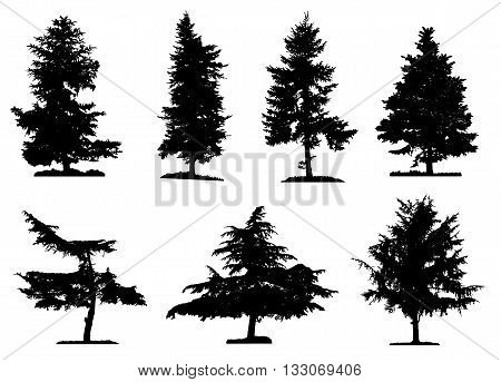 Coniferous trees silhouettes collection on white background , on different layers