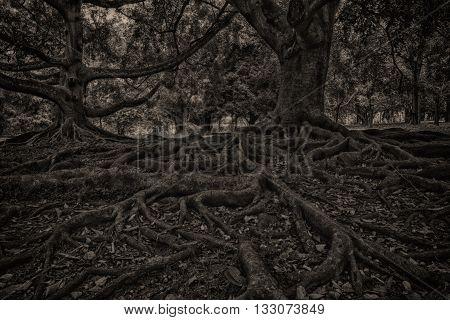 Крупные корни деревьев и самы