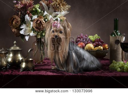 Yorkshire terrier dog with fruit flowers and wine in classical Dutch style