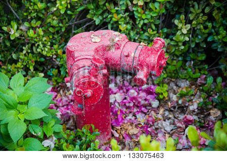Red fire hydrant stand in the park.
