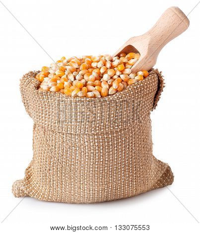 Corn with wooden scoop in burlap bag isolated on white. Corn seeds in sack. Dry uncooked corn grains for popcorn