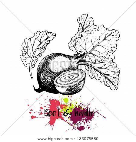 Vector hand drawn illustration of beet with haulm. Engraving garden fresh vegetable isolated on white background. For cocktail smoothie cooking and salsds.