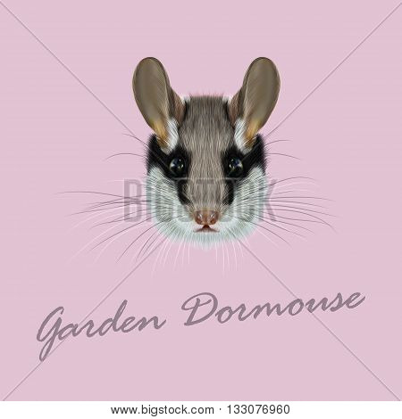 Vector Illustrated Portrait of Garden dormouse. Cute face of fluffy Garden dormouse on pink background.