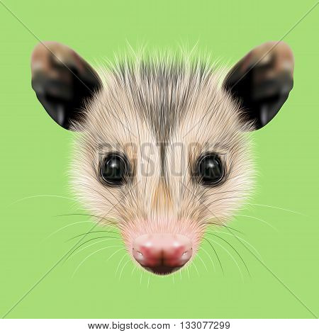 Illustrated Portrait of Opossum. Cute fluffy face of Opossum on green background.