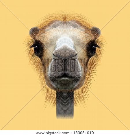Illustrated Portrait of Camel. Cute face of Camel on yellow background.