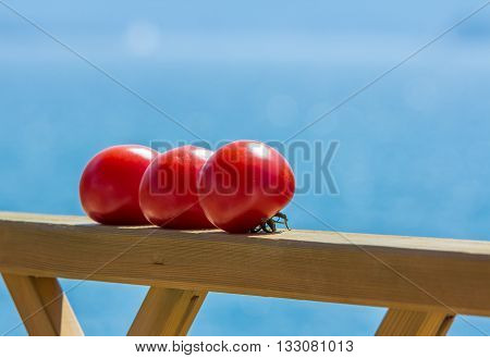 three tomatoes on a wooden rail ripening in the sunshine