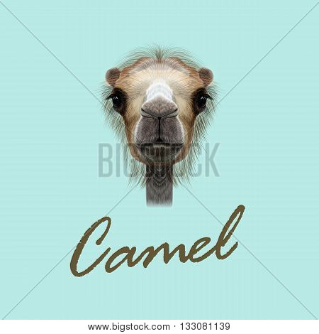 Vector Illustrated Portrait of Camel. Cute face of Camel on blue background.