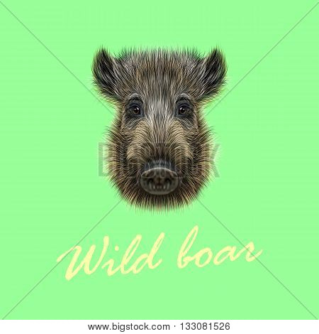Vector Illustrated of Wild boar. Formidable face of wild pig on green background.