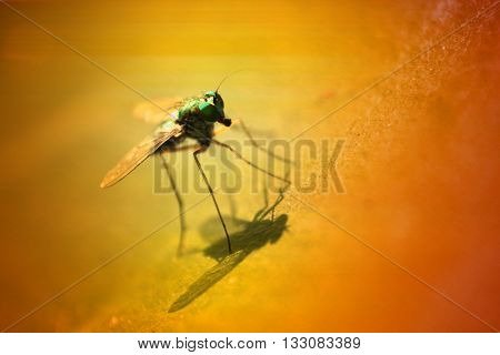A macro closeup view of a green colored fly in bright sun.