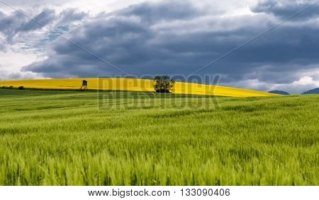Rapeseed field landscape and dark cloudscape, Slovakia