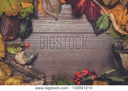 colorful autumn leaves frame on the wooden background