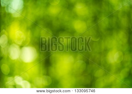 Abstract green bokeh background ( Graphic resource )