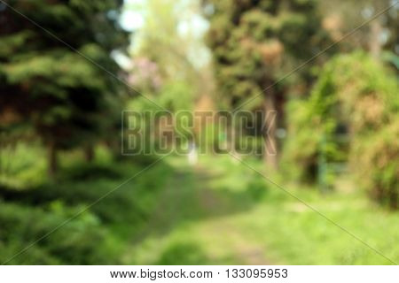 Footpath in a green park. Blurred nature background