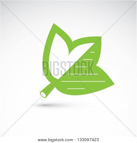 Spring Maple Tree Leaf, Botany And Eco Flat Image. Vector Illustration Of Herb, Natural And Ecology