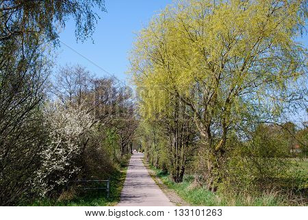 Walkway surrounded of colorful trees at spring