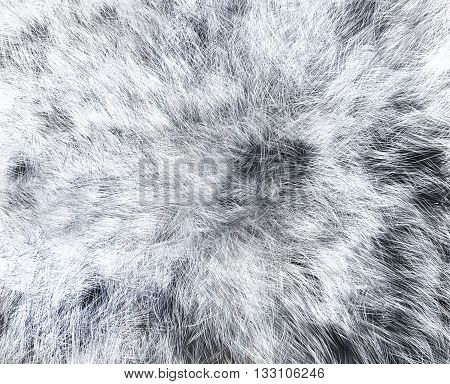 White wolf skins texture - close-up 3D rendering. Fashion element design.
