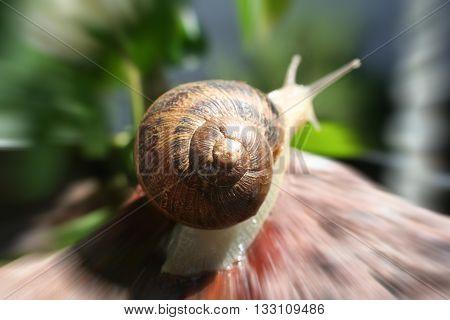 Snail Zoom Burst Close Up Stock Photo High Quality