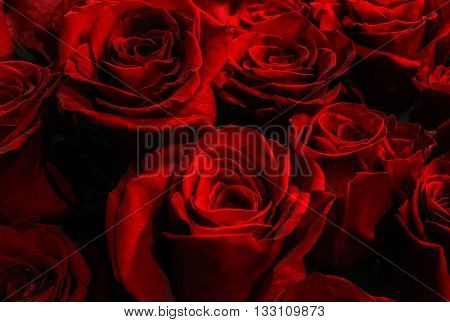 Beautiful large festive bouquet of red roses. red scarlet roses on a black background