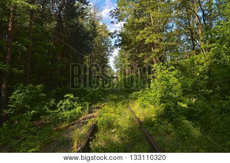 Abandoned railroad routed through the woods overgrown with trees