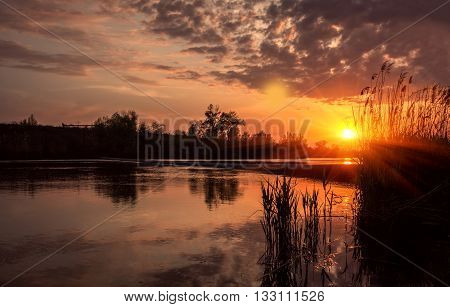 beautiful summer sunset on the pond with bulrush