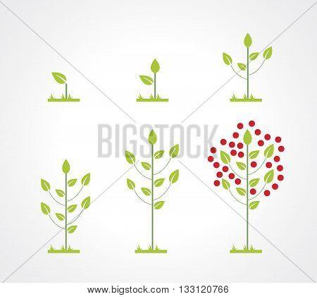 Growing tree icon set. Flat style design