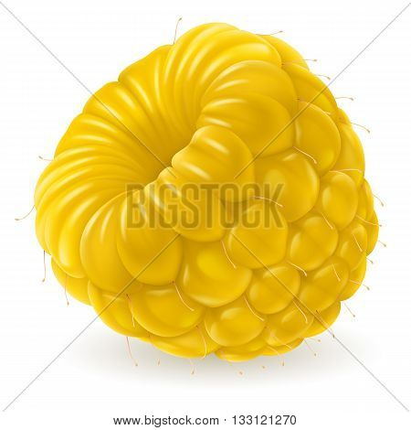 Fresh yellow raspberry isolated on white background. Realistic illustration