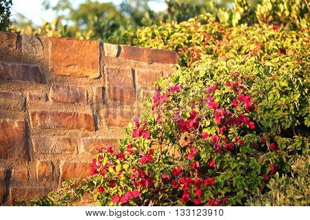 Wild flowers are standing next a wall during sunset.