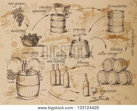 Wine production scheme. How to make wine. General principles. Vector illustration.