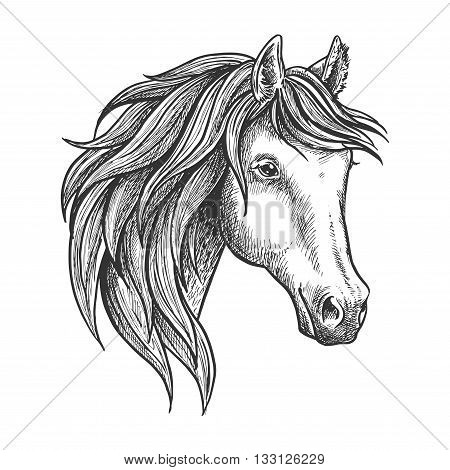 Strongly built and elegant andalusian stallion with thick mane and soft and fluffy ears. Sketched portrait of spanish horse for dressage and show jumping competition symbol or horse breeding theme design