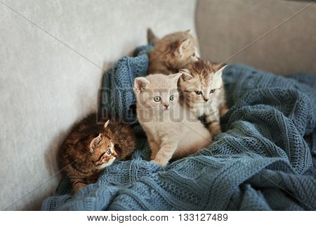 Small cute kittens on couch
