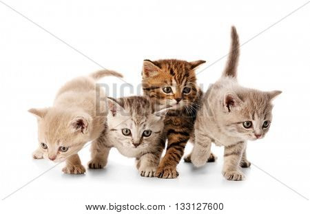 Small cute kittens, isolated on white