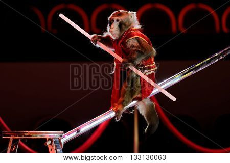 ST. PETERSBURG, RUSSIA - JUNE 2, 2016: Trained monkey in the dress rehearsal of the Show of Water, Fire, And Light in the Ciniselli circus. This new show first time arrived in St. Petersburg