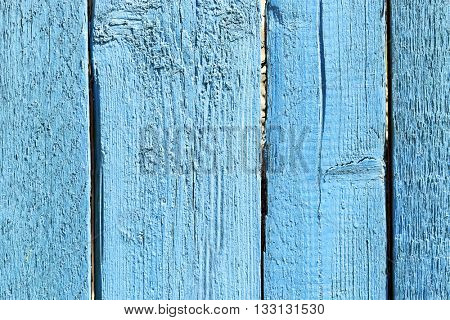 Wood tree texture background