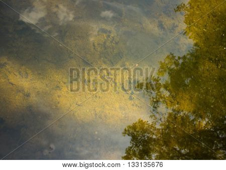 Trees and clouds reflected on the clear lake