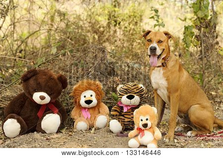 Dog toys a very big dog happy to be outdoors surrouned by toys.