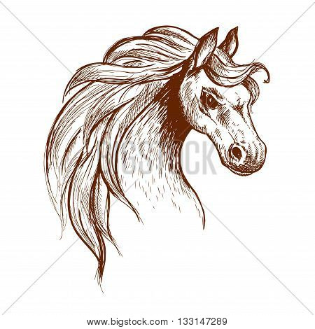 Angry brumby horse sketch icon of a head of wild and free-roaming feral horse in aggressive posture. Use as wildlife sanctuary or animal theme design