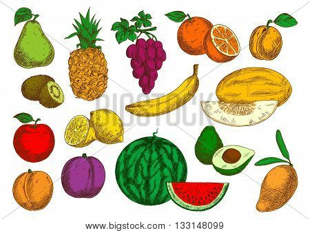 Sweet flavorful tropical mango and banana, pineapple and oranges, avocado, kiwis and lemons, selected garden apple, peach and grapes, pear, plum and apricot, ripe melon and watermelon fruits sketches