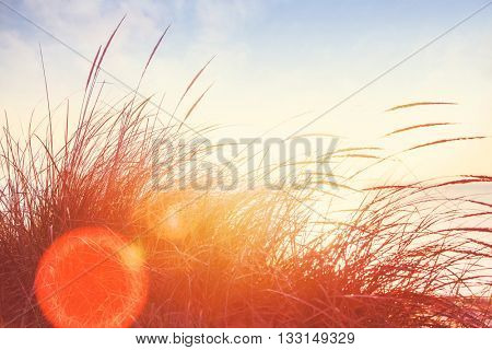 beach grasses on the seashore, intentionally shot into the setting sun