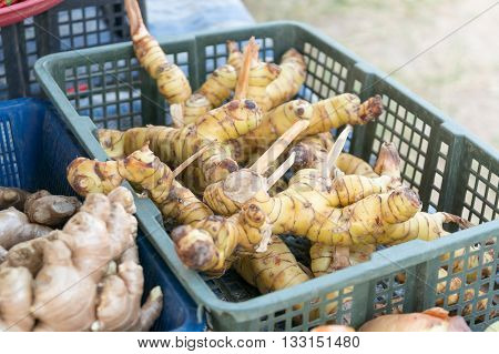galangals in local fresh market of thailand