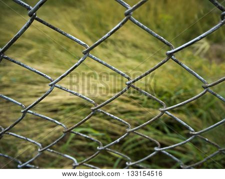 Long leaf grass behind the Steel Grating Fence