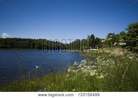 white flowers blossoming on the shoreline of a lake