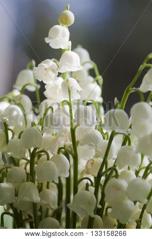 part of a bouquet of lily of the valley