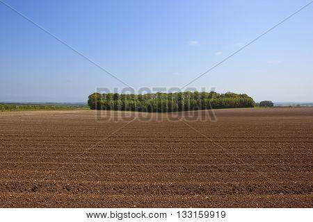 Woodland Copse In Summer