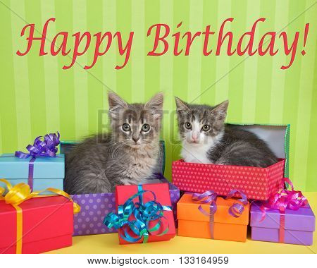 two month old tabby kittens peeking out of birthday present in a pile of brightly colored boxes with party hats bright green stripped background with Happy Birthday text above