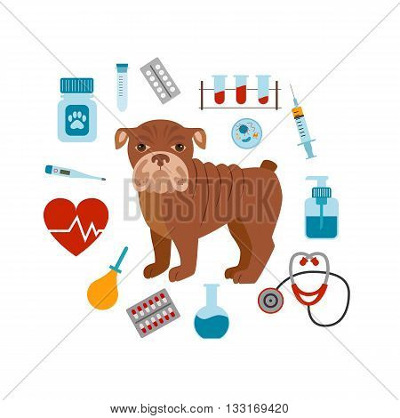 Vet cartoon concept. Vector veterinary dog illustration. Concept of flat veterinary clinic icons. Colorful veterinary medicine concept  for your design. Veterinary dog breed bulldog isolated.