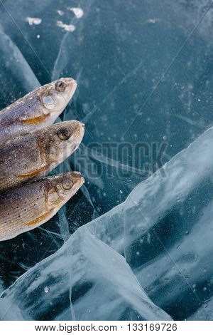 Winter fishing on Lake Baikal. Catching perch and grayling in the clean and beautiful place! The deepest freshwater lake on the planet. Fish body was retouched.
