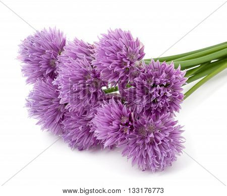 Chives Flowers isolated on a white background